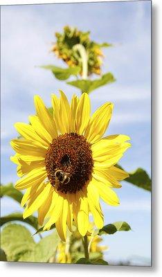 Bee On Flower Metal Print by Les Cunliffe