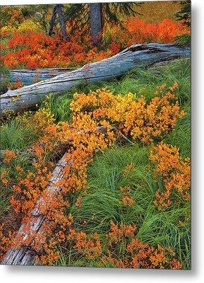 Usa, Oregon, Willamette National Forest Metal Print