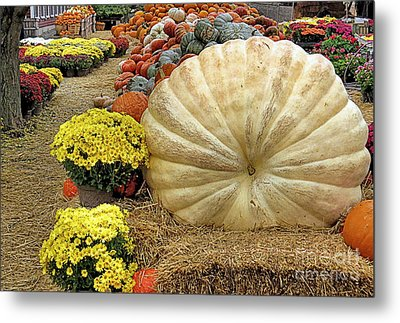 917 Pound Pumpkin Metal Print
