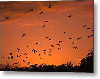 Birds At Sunset Metal Print