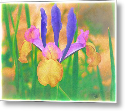 A Bearded Iris In My Vincent Van Gogh Garden Metal Print