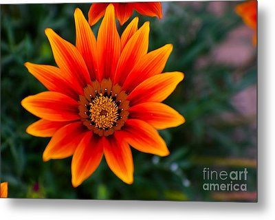 A Beautiful Beginning Metal Print by Syed Aqueel