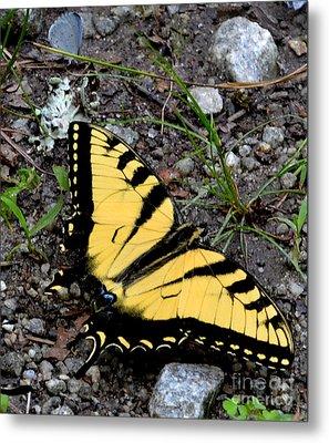 A Beautiful Swallowtail Butterfly Metal Print by Eva Thomas