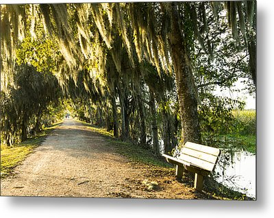 A Bench Under Golden Spanish Moss Metal Print by Ellie Teramoto