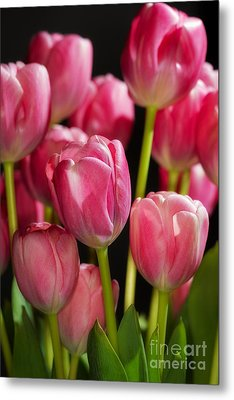 Metal Print featuring the photograph A Bouquet Of Pink Tulips by Nick  Biemans