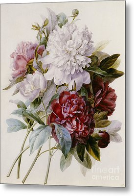 A Bouquet Of Red Pink And White Peonies Metal Print by Pierre Joseph Redoute