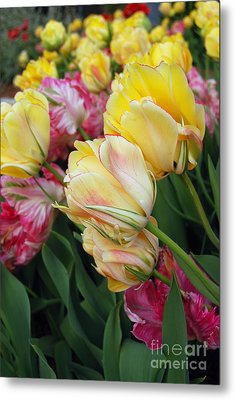A Bouquet Of Tulips For You Metal Print by Eva Kaufman