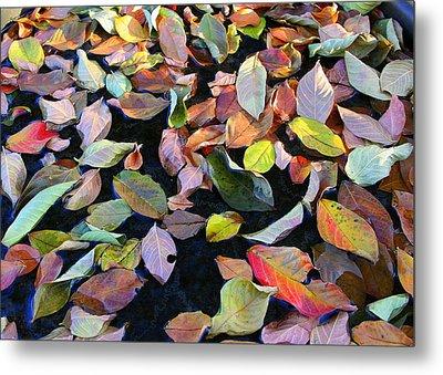 A Bowl Of Autumn Metal Print by Paula Tohline Calhoun
