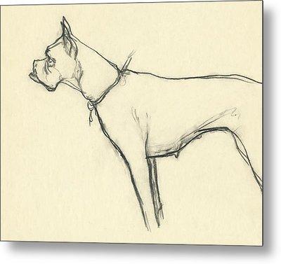 A Boxer Dog Metal Print by Carl Eric Erickson