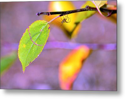 A Branch With Leaves Metal Print by Tommytechno Sweden