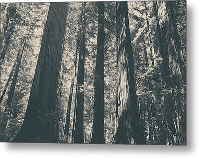 A Breath Of Fresh Air Metal Print