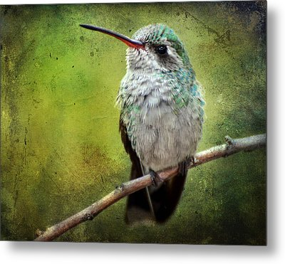 A Broad-billed Hummer Metal Print