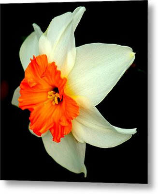 A Burst Of Springtime Glory Metal Print by Rosanne Jordan