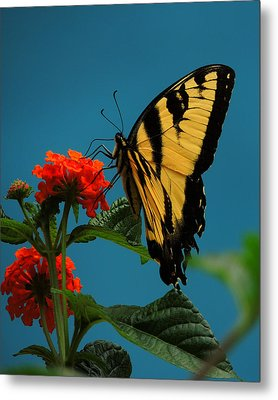 A Butterfly Metal Print by Raymond Salani III