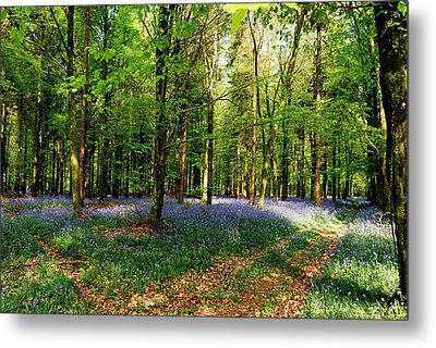 Metal Print featuring the photograph A Carpet Of Colour by Wendy Wilton