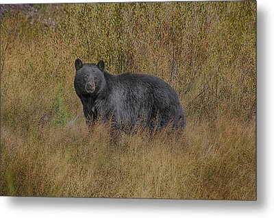 Metal Print featuring the photograph A Casual Glance by Gary Hall