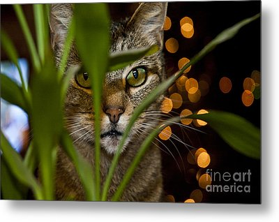 A Cat Hides Behind A Plant 2 Metal Print by Micah May
