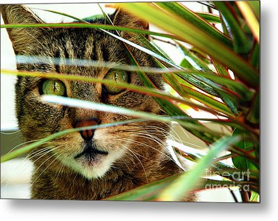 A Cat Hides Behind A Plant 3 Metal Print by Micah May