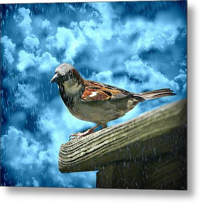 A Chance Of Showers Metal Print by Barbara S Nickerson
