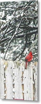 A Christmas Cardinal Metal Print by PainterArtist FIN