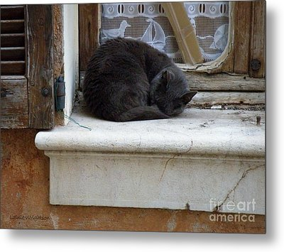 A Circled Up Cat  Metal Print by Lainie Wrightson
