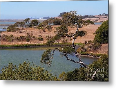 Metal Print featuring the photograph A Cove In Late Summer At Elkhorn Slough by Susan Wiedmann