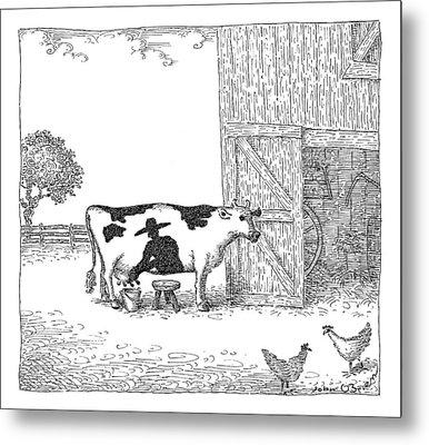 A Cow Has A Spot That Looks Like A Farmer Metal Print