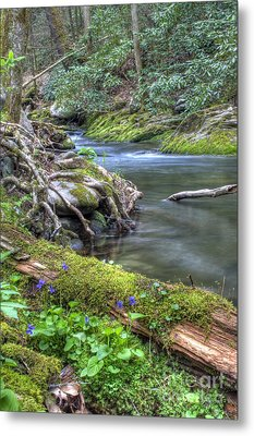 A Creek Side Hike Metal Print