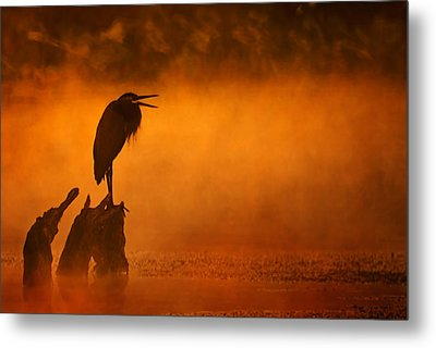 A Cry In The Mist Metal Print by Robert Charity