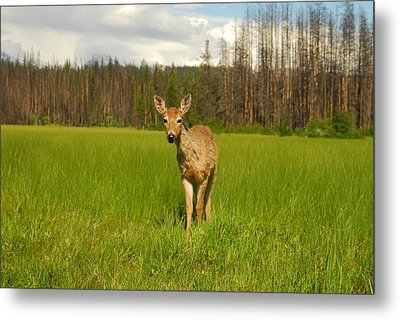 A Curious Friend Metal Print by Larry Moloney