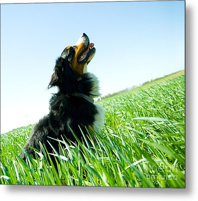 A Cute Dog On The Field Metal Print