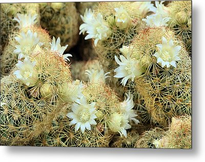 A Desert Floral Metal Print by JC Findley