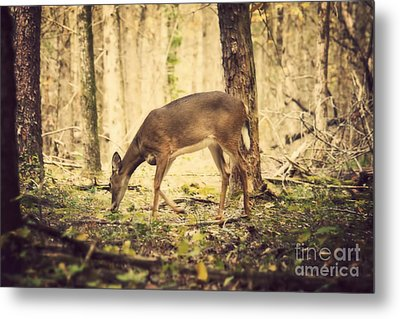 A Doe In The Forest Metal Print by Lena Auxier