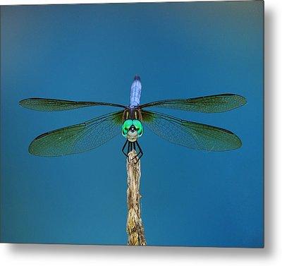 A Dragonfly IIi Metal Print by Raymond Salani III
