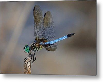 A Dragonfly Iv Metal Print