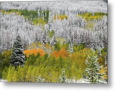 Metal Print featuring the photograph A Dusting Of Snow by Geraldine Alexander