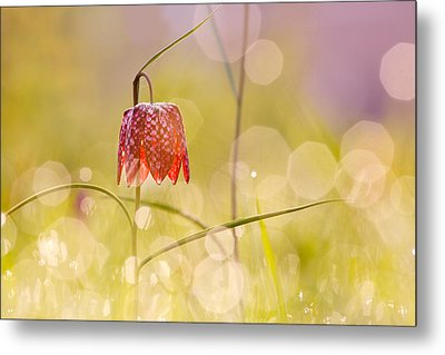 A Fairies' Place II _snake's Head Fritillary Metal Print by Roeselien Raimond