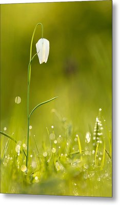 A Fairies' Place IIi _snake's Head Fritillary Metal Print