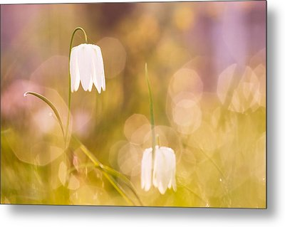 A Fairies' Place Metal Print by Roeselien Raimond