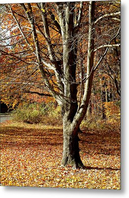 A Fall Tree In New England Metal Print by Mike McCool