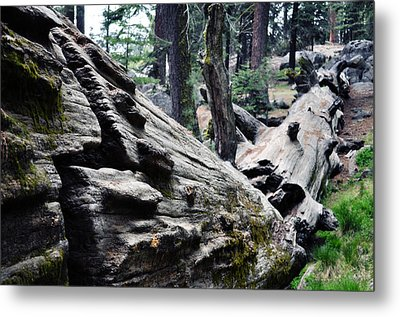 Metal Print featuring the photograph A Fallen Giant Sequoia by Kyle Hanson