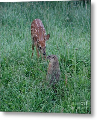Metal Print featuring the photograph A Fawn And A Woodchuck by Jim Lepard