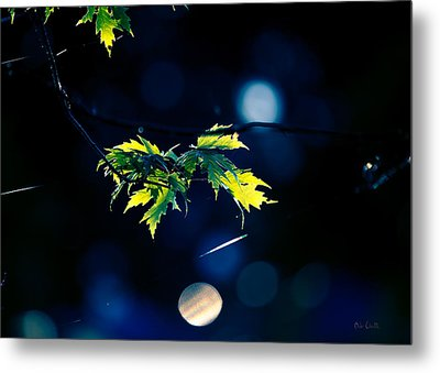 A Few Leaves In The Sun Metal Print by Bob Orsillo