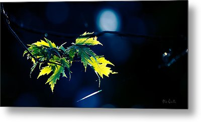 A Few Leaves In The Sun Two Metal Print by Bob Orsillo