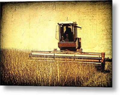 A Field For Harvest Metal Print by Lincoln Rogers