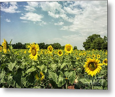 A Field Of Glory Metal Print by Terry Rowe