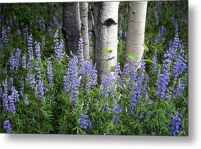 A Forest Of Blue Metal Print