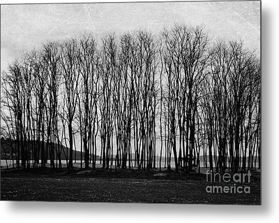 A Forest Of Trees Metal Print by Sylvia Cook
