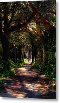A Forest Path -dungeness Spit - Sequim Washington Metal Print