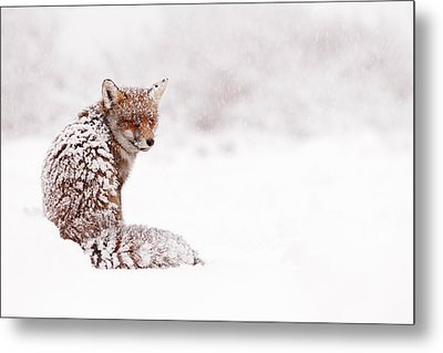 A Red Fox Fantasy Metal Print